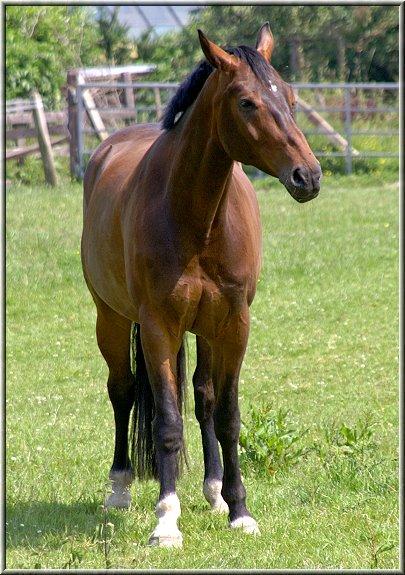 alle meine pferde -- die fotoschule
